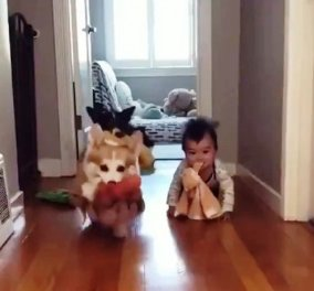 Όλα τα λεφτά μωρό μου....: Ο μπέμπης μπουσουλάει κρατώντας στο στόμα παιχνίδι - Τον ακολουθούν τα σκυλάκια (βίντεο) - Κυρίως Φωτογραφία - Gallery - Video