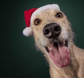 "Smile: 19 εορταστικές φωτογραφίες σκύλων που θα σας κάνουν να ""δακρύσετε από τα γέλια""! Φώτο - Κυρίως Φωτογραφία - Gallery - Video"
