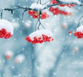 Έρχεται νέο κύμα κακοκαιρίας με εντονότερα φαινόμενα: Τσουχτερό κρύο, παγετός & βροχές σε όλη τη χώρα - Κυρίως Φωτογραφία - Gallery - Video