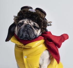 """Όταν λέμε ότι Moncler φοράνε και οι αριστοκράτες σκύλοιή ότι""""πετάς""""με τα περίφημαμπουφάν, το εννοούμε; Ναιιι! Απίστευτεςδιαφημίσεις- Φώτο & Βίντεο - Κυρίως Φωτογραφία - Gallery - Video"""