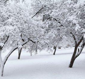 Ο μετεωρολόγος Καλλιάνος για χιονο-κακοκαιρία από Κυριακή: «Θα είναι η πιο σοβαρή μέχρι στιγμής» - Κυρίως Φωτογραφία - Gallery - Video