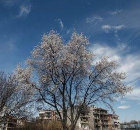 Καιρός: Ηλιοφάνεια και άνοδος της θερμοκρασίας σήμερα, Πέμπτη - Κυρίως Φωτογραφία - Gallery - Video