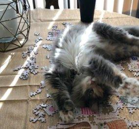 90 γάτες βοηθάμε με την τρέλα των παζλ λόγω κορωνοϊού - Δείτε φωτό  - Κυρίως Φωτογραφία - Gallery - Video
