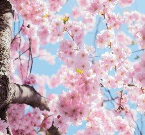 H Άντα Λεούση μας δίνει τις ημερήσιες προβλέψεις για όλα τα ζώδια - Κυρίως Φωτογραφία - Gallery - Video