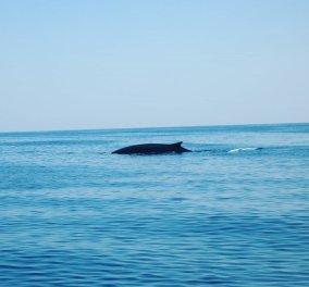 Και μια ωραία εικόνα απολαυστικής ηρεμίας: Φάλαινες στα νερά της Μεσογείου πλησίασαν λόγω lockdown (βίντεο) - Κυρίως Φωτογραφία - Gallery - Video