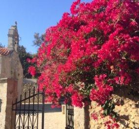 Πρωτομαγιά στην ανέγγιχτη ενδοχώρα της Κρήτης - Στο μικρό χωριό Καψαλιανά, η Άνοιξη σε όλο της το μεγαλείο (φωτό) - Κυρίως Φωτογραφία - Gallery - Video