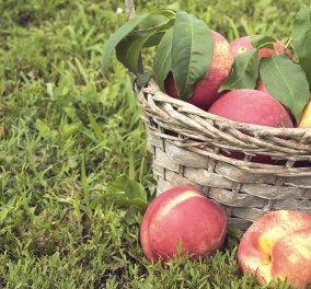 Νεκταρίνια: Το απόλυτο καλοκαιρινό φρούτο - Ποια η διατροφική του αξία; - Κυρίως Φωτογραφία - Gallery - Video
