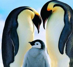 Σας αρέσουν οι ωκεανοί; Οι πιγκουίνοι που περπατούν καμαρωτοί, το ταξίδι στην Ανταρκτική, τα παιχνιδιάρικα δελφίνια; Υπέροχα βίντεο - Κυρίως Φωτογραφία - Gallery - Video