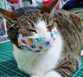 Οι γάτες μπορούν να κολλήσουν κορωνοϊό από τους ανθρώπους – Ποια είναι τα συμπτώματα που έχουν - Κυρίως Φωτογραφία - Gallery - Video