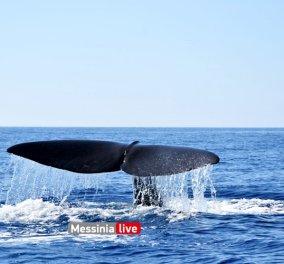 Στα «εξωτικά» νερά της Μάνης εμφανίστηκε τεράστια φάλαινα φυσητήρας μήκους 20 μέτρων - Κατέπληξε όσους είδαν το πελώριο κήτος με τα γιγάντια πτερύγια (Φωτό)   - Κυρίως Φωτογραφία - Gallery - Video