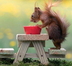 Το eirinika σας φτιάχνει την μέρα με τα κλικς! Σκιουράκια παίζουν πηδούν & γελούν αποδεικνύοντας ότι είναι οι πιο χαριτωμένοι του ζωικού βασιλείου  - Κυρίως Φωτογραφία - Gallery - Video