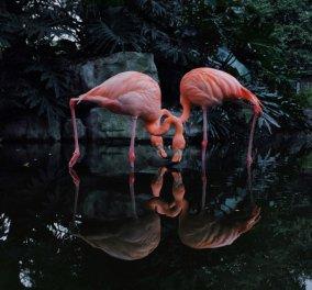 iPhone Photography Awards 2020: Ποιες είναι οι φωτογραφίες - νικήτριες με τα πρώτα βραβεία - Κυρίως Φωτογραφία - Gallery - Video