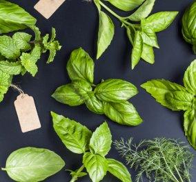 Βασιλικός! Υπέροχη μυρωδιά, υπέροχα οφέλη για την υγεία - Αντιοξειδωτικός και αντιφλεγμονώδης! - Κυρίως Φωτογραφία - Gallery - Video