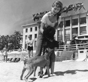 Η Brigitte Bardot στα υπέροχα νιάτα της ποζάρει με τα πολυαγαπημένα της σκυλιά  - Θαυμάσιες vintage φωτό - Κυρίως Φωτογραφία - Gallery - Video