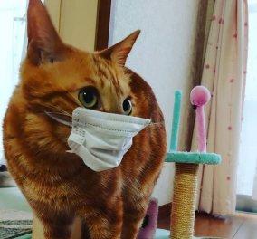Σε καραντίνα πρέπει να μπαίνουν οι γάτες γιατί γίνονται υπερματαδότες κορωνοϊού όταν κάποιος πάσχει στο σπίτι – Η έρευνα   - Κυρίως Φωτογραφία - Gallery - Video