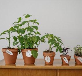 Σπύρος Σούλης: Αυτό είναι το ιδανικότερο φυτό για να διακοσμήσετε το εσωτερικό του σπιτιού σας - Κυρίως Φωτογραφία - Gallery - Video