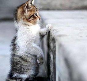 Οι γάτες είναι μαγικά πλάσματα: Έχουν ενσυναίσθηση & μπορούν να θεραπεύσουν το μυαλό, το σώμα & την ψυχή - Κυρίως Φωτογραφία - Gallery - Video