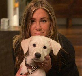 H Jennifer Aniston έκανε Thanksgiving με τον σκύλο της- Οι φωτογραφίες που συγκέντρωσαν 5 εκατ.likes!  - Κυρίως Φωτογραφία - Gallery - Video