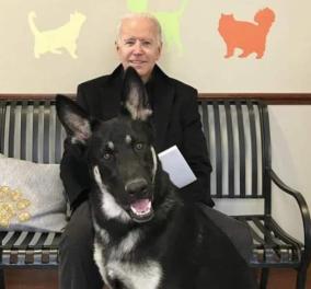 Τζο Μπάιντεν: Τα σκυλιά του, Major & Champ απέκτησαν Τwitter - Το πρώτο αδέσποτο που μπαίνει στον Λευκό Οίκο (φωτό) - Κυρίως Φωτογραφία - Gallery - Video