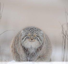 10 δυνατά κλικς που αποτυπώνουν την ομορφιά των άγριων ζώων - Ανάμεσα στις καλύτερες φωτογραφίες του 2020 - Κυρίως Φωτογραφία - Gallery - Video