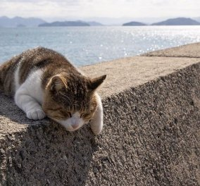 40 αδέσποτες γάτες με προσωπικότητα - Τις καταπληκτικές φωτό τράβηξε γνωστός Ιάπωνας φωτογράφος - Θα τις αγαπήσετε!  - Κυρίως Φωτογραφία - Gallery - Video
