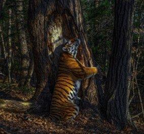 Οι νικήτριες φωτογραφίες του Wildlife Photographer Of the Year:  Η ομορφιά της άγριας ζωής σε εκπληκτικά κλικς - Κυρίως Φωτογραφία - Gallery - Video