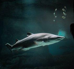 Βίντεο - Για δυνατούς θεατές: Η στιγμή της επίθεσης καρχαρία σε Γερμανίδα μέσα στον βυθό της Ερυθράς Θάλασσας που κάνει κατάδυση  - Κυρίως Φωτογραφία - Gallery - Video