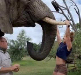 Εσείς έλξεις σε χαυλιόδοντες ελέφαντα έχετε κάνει; Η Emma το τόλμησε και ξεσήκωσε σάλο διαμαρτυριών - Κυρίως Φωτογραφία - Gallery - Video