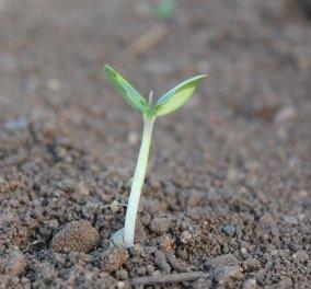 Φύτρα: Nα γιατί πρέπει να τα τρώτε & πως να τα καλλιεργήσετε - Κυρίως Φωτογραφία - Gallery - Video