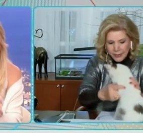 Λίτσα Πατέρα: Η στιγμή που ο γάτος της την δαγκώνει στον αέρα της εκπομπής! - «Κάτσε παιδάκι μου» (βίντεο) - Κυρίως Φωτογραφία - Gallery - Video