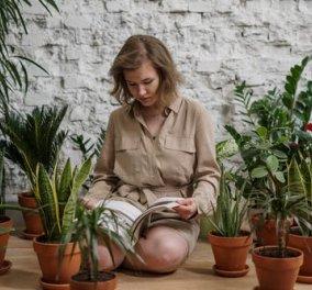 O Σπύρος Σούλης μας προτείνει:  7+1 πρωτότυπα χειμερινά Tips διακόσμησης με φυτά - Κυρίως Φωτογραφία - Gallery - Video