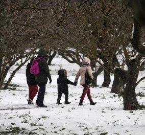 Μήδεια: Δείτε live την πορεία της κακοκαιρίας - Έφτασε τους -20 το θερμόμετρο - Που χιονίζει τώρα; (φωτό & βίντεο) - Κυρίως Φωτογραφία - Gallery - Video