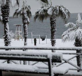 Τα χιόνια ως την θάλασσα: Στα λευκά οι αμμουδιές & οι φοίνικες - Τολμηροί χειμερινοί κολυμβητές πήγαν για μπάνιο! (φωτό) - Κυρίως Φωτογραφία - Gallery - Video