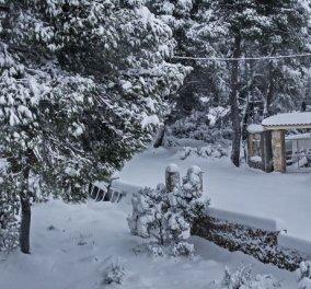 Καιρός - ''Μήδεια'': Ισχυρές χιονοπτώσεις και σήμερα Τρίτη και άνεμοι έως 10 μποφόρ  - Κυρίως Φωτογραφία - Gallery - Video