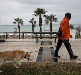 Κορωνοϊός: Βρέθηκε για πρώτη φορά η «βρετανική» παραλλαγή σε γάτες και σκύλους  - Νόσησαν ζώα σε Ευρώπη και ΗΠΑ - Κυρίως Φωτογραφία - Gallery - Video