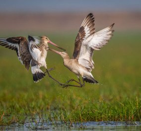 """Οι 31 φιναλίστ στον Παγκόσμιο διαγωνισμό φωτογραφίας πουλιών 2021: """"Προσδεθείτε"""" - Ξεκινάει ένα μαγικό ταξίδι σε ασύλληπτες εικόνες από τη φύση (φώτο) - Κυρίως Φωτογραφία - Gallery - Video"""