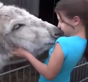 Μα τι ωραίο βίντεο! Ο γαϊδαράκος δείχνει την αγάπη του στο κορίτσι που το μεγάλωσε - Κυρίως Φωτογραφία - Gallery - Video