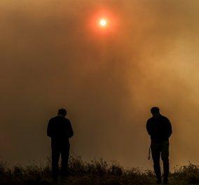 Χαρδαλιάς:  Μάχη με τις φλόγες στο Σχίνο - 20 χιλιάδες στρέμματα δάσους στάχτη για να καούν κλαδιά σε ελαιώνα -  Σε κατάσταση έκτακτης ανάγκης τα Μέγαρα  (φώτο) - Κυρίως Φωτογραφία - Gallery - Video