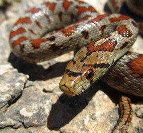 Φίδι τρύπωσε στα ΚΤΕΛ Κηφισού: Σε πανικό οι ταξιδιώτες - Άνδρες της ομάδας ΔΙΑΣ έβγαλαν το φίδι ένα το όχημα (βίντεο) - Κυρίως Φωτογραφία - Gallery - Video