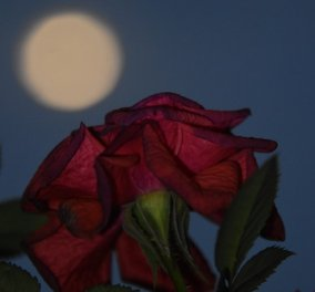 Άση Μπήλιου: Αυτά τα 4 ζώδια θα επηρεάσει περισσότερο η Πανσέληνος στον Αιγόκερω (24/06) - Μια από τις πιο δυνατές ημέρες αστρολογικά - Κυρίως Φωτογραφία - Gallery - Video