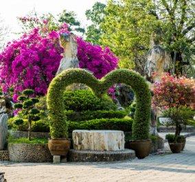 Σπύρος Σούλης: Δείτε πώς θα φτιάξετε μια παραδεισένια βεράντα! -Λουλούδια & χρώμα για το φετινό καλοκαίρι  - Κυρίως Φωτογραφία - Gallery - Video