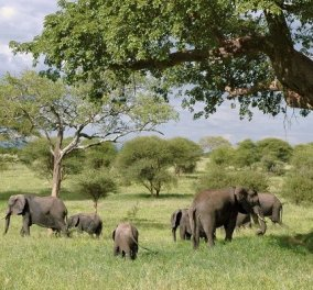 Οι ελέφαντες «που πήγαν εκδρομή» πήραν έναν υπνάκο! Το περιπλανώμενο κοπάδι που έχει αναστατώσει την Κίνα με το παράδοξο ταξίδι του (βίντεο) - Κυρίως Φωτογραφία - Gallery - Video
