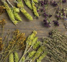 Το φαρμακείο της φύσης στο πιάτο σας: Χρησιμοποιούμε βότανα όχι μόνο για το ιδιαίτερο άρωμα & την πλούσια γεύση τους, αλλά & για καλύτερη υγεία! - Κυρίως Φωτογραφία - Gallery - Video