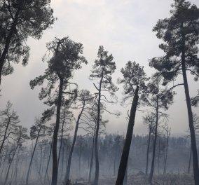 Εφιαλτική η κατάσταση στην Εύβοια - Αναζωπυρώθηκε η φωτιά στην Στροφυλιά - Καίγονται σπίτια  - Εκκενώθηκε το κέντρο υγείας στο Μαντούδι (φώτο-βίντεο) - Κυρίως Φωτογραφία - Gallery - Video