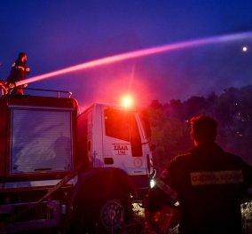 Ο Γιάννης Σουλιώτης γράφει γιατί η πυρκαγιά στα Βίλια δεν σβήνει: Το πυκνό πευκοδάσος χωρίς αντιπυρικές ζώνες… - Κυρίως Φωτογραφία - Gallery - Video