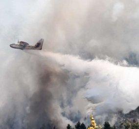 Συναγερμός στα Βίλια: Άλλαξαν οι άνεμοι και οι φλόγες πλησιάζουν στα σπίτια – Η φωτιά απειλεί τον οικισμό (βίντεο) - Κυρίως Φωτογραφία - Gallery - Video