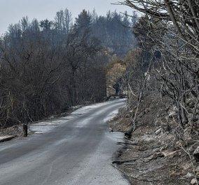 Πυρκαγιές: Συνεχίζουν να επιχειρούν οι πυροσβεστικές δυνάμεις σε Γορτυνία, Ηλεία και Ανατολική Μάνη - Υψηλός κίνδυνος σήμερα σε Αττική  - Κυρίως Φωτογραφία - Gallery - Video