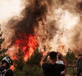 Live: Πύρινος όλεθρος - Όλες οι εξελίξεις για τις φωτιές στην Ελλάδα - Κυρίως Φωτογραφία - Gallery - Video