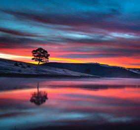 Τι μπορούν να σας διδάξουν τα δέντρα για την εύρεση της ευτυχίας - Δεν βιώνουν την απογοήτευση - Κυρίως Φωτογραφία - Gallery - Video