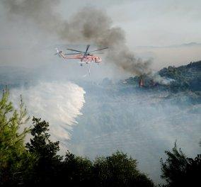 Μαραθώνας: Η φωτιά κυκλώνει τη λίμνη - Σε λειτουργία η τηλεφωνική υπηρεσία 1110 για πολίτες με αναπνευστικά προβλήματα - Κυρίως Φωτογραφία - Gallery - Video